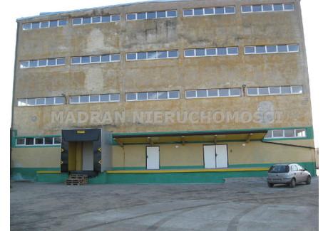 Obiekt do wynajęcia - Łowicz, Łowicki, 2190 m², 23 900 PLN, NET-MDR-BW-450