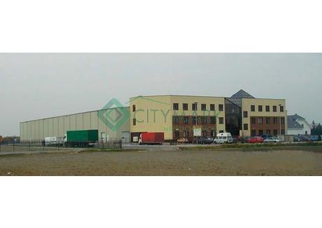 Magazyn, hala do wynajęcia - Okęcie, Włochy, Warszawa, 6300 m², 151 200 PLN, NET-58151