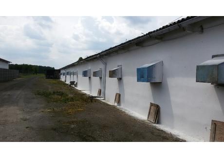 Gospodarstwo rolne na sprzedaż - Żelisław, Małomice, Żagański, 1000 m², 500 000 PLN, NET-SKur-RE51-669-34403