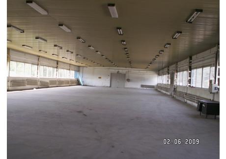 Magazyn do wynajęcia - Zielona Góra, 775 m², 8000 PLN, NET-77/1850/OOW