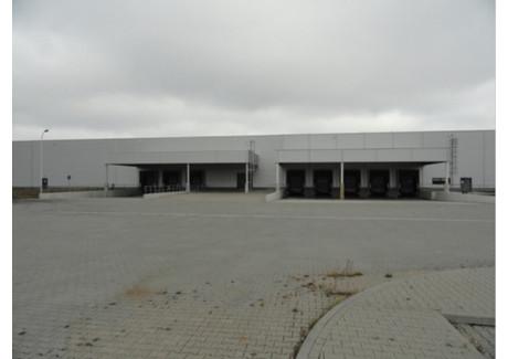Magazyn do wynajęcia - Nowa Sól, Nowosolski, 17 600 m², 299 200 PLN, NET-86/1850/OOW