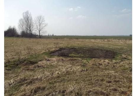 Działka na sprzedaż - Wiązów, Strzeliński, 3300 m², 80 000 PLN, NET-16722