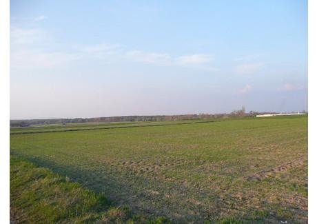 Działka na sprzedaż - Wtórek, Ostrów Wielkopolski (gm.), Ostrowski (pow.), 3900 m², 199 000 PLN, NET-G036