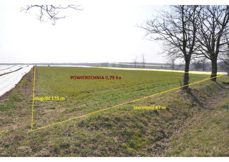 Działka na sprzedaż - Zagajew, Warta, Sieradzki, 7900 m², 99 000 PLN, NET-KWK-GS-1325-1