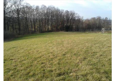 Działka na sprzedaż - Buczyna Bestwina, Bielski, 7900 m², 300 000 PLN, NET-31