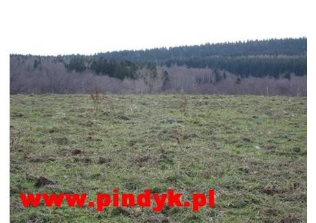 Działka na sprzedaż - Kopaniec, Stara Kamienica, Jeleniogórski, 63 000 m², 630 000 PLN, NET-PIN17722