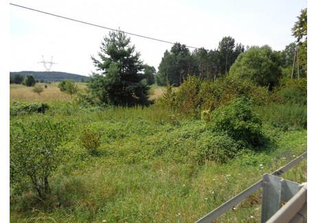 Działka na sprzedaż - Radkowicka Brzeziny, Morawica (gm.), Kielecki (pow.), 40 000 m², 800 000 PLN, NET-sssi-1