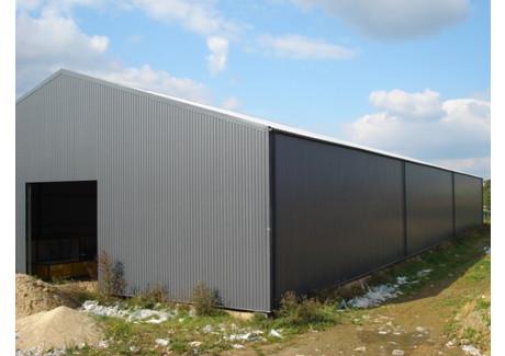 Komercyjne do wynajęcia - Przecław, Kołbaskowo, Policki, 1281 m², 19 215 PLN, NET-SCNS1314