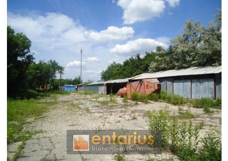 Działka do wynajęcia - Piaseczno, Piaseczyński, 3000 m², 5000 PLN, NET-117641