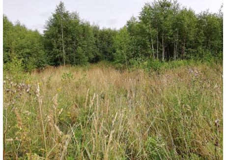 Działka na sprzedaż - Borcz, Somonino, Kartuski, 3298 m², 110 000 PLN, NET-4884/260/OGS