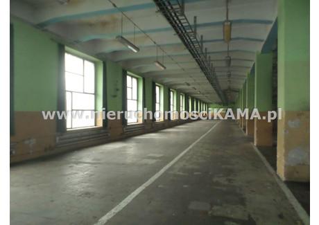 Magazyn do wynajęcia - Centrum, Bielsko-Biała, Bielsko-Biała M., 1200 m², 14 400 PLN, NET-NBK-HW-1554