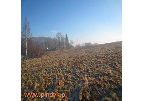 Działka na sprzedaż - Wojcieszyce, Stara Kamienica, Jeleniogórski, 1500 m², 105 000 PLN, NET-PIN19094